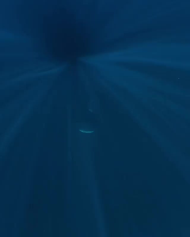 Watch and share Whale Shark Emerging From The Depths GIFs by Pardusco on Gfycat