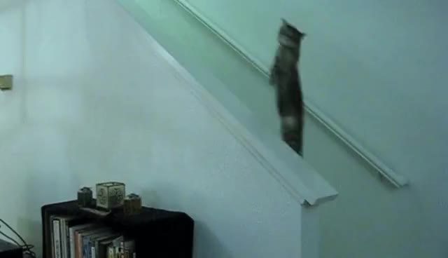 Cat, cool, funny, Paranormal Cativity GIFs