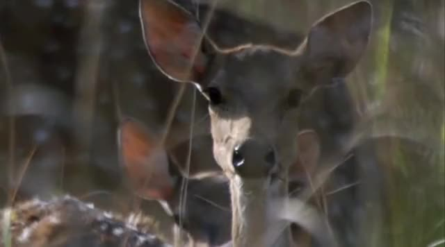 Watch and share Deer GIFs by likkaon on Gfycat