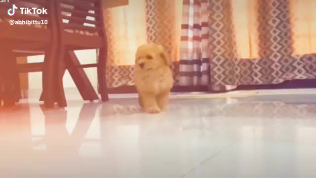 The best therapist as for and four legs 🐾 #blush #friends #happylife #shihtuz #animallover #tiktok shihtuz happylife friends blush GIF