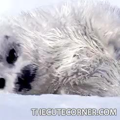 Watch and share Baby Seal Pictures GIFs and Cute Animals Gif GIFs on Gfycat