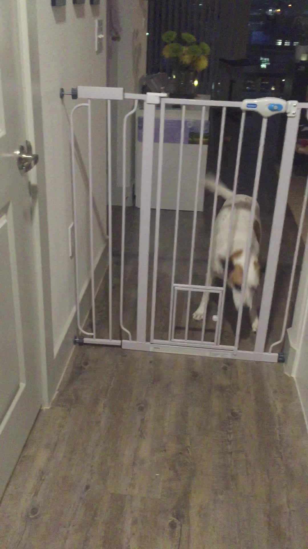 PetBehavior, funny, What do you mean, 'cat' door? GIFs