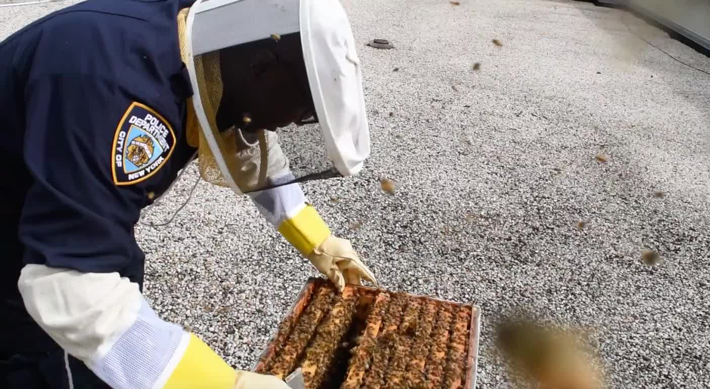 quick! get the bees back inside GIFs