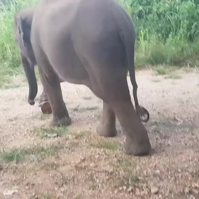 elephant, He doesnt like trash. GIFs