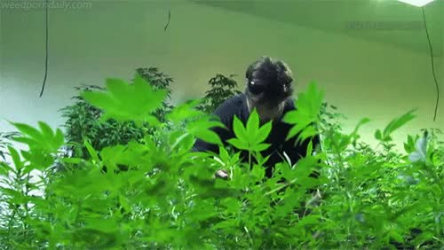 Watch and share Medical Marijuana GIFs and Mary Jane GIFs by WeedPornDaily on Gfycat
