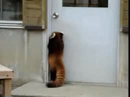 Watch and share Post Firefox Door Jump GIFs on Gfycat