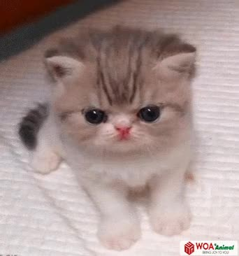 Watch and share Very Very Cute Ketty GIFs on Gfycat