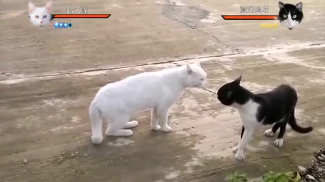Watch Just a normal cat fight! GIF on Gfycat. Discover more Dog, Naruto, animals, cat, cute, funny GIFs on Gfycat
