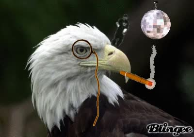 Watch and share Eagle-gif-9 GIFs on Gfycat