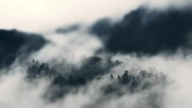 Watch and share Foggy GIFs and Fog GIFs by siddised on Gfycat
