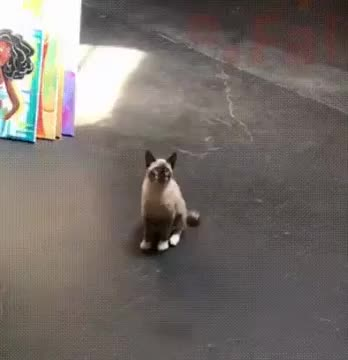 Watch and share Cat GIFs by thic_flat on Gfycat