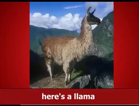 Watch and share Llama Song GIFs and Lolllama GIFs on Gfycat