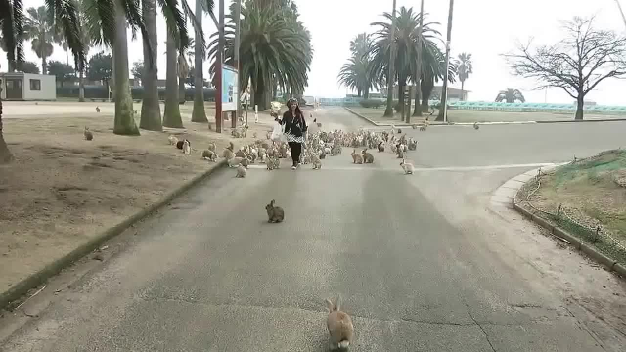 Rabbits On Okunoshima Island GIFs