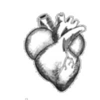 Watch beating heart GIF on Gfycat. Discover more related GIFs on Gfycat