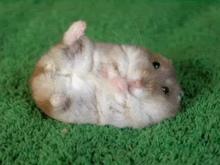 Watch and share Cute Hamsters GIFs on Gfycat