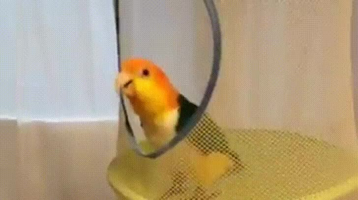 Trampoline birb is happiest birb GIFs