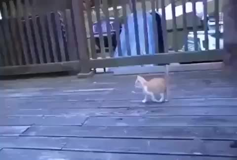 Watch and share Kitten Discovers The Mother Of All Play Toys GIFs by tothetenthpower on Gfycat