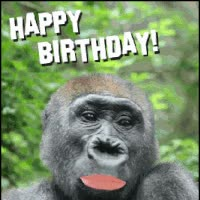 Watch and share Birthday Gorilla GIFs on Gfycat