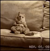 Watch and share Funny Cat Dancing On Couch GIFs on Gfycat