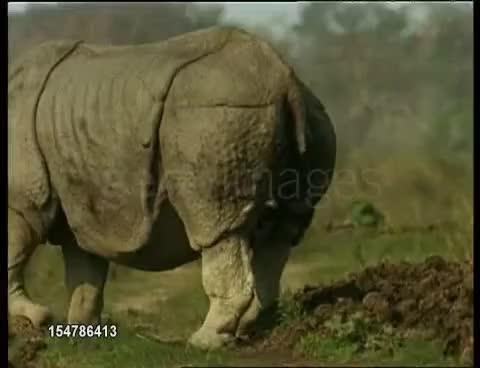 Watch and share Rhino Pooping GIFs on Gfycat
