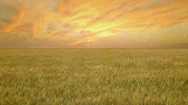 Watch Wheat Field - Free Creative Commons particle motion background video 1080p HD GIF on Gfycat. Discover more chromakey GIFs on Gfycat