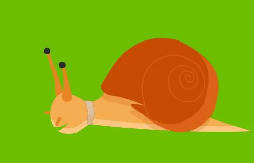 slow, snail, Slow GIFs