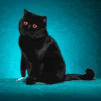 Watch Smoking Cat GIF on Gfycat. Discover more related GIFs on Gfycat