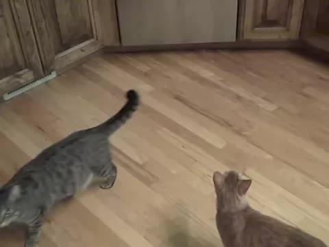 Whatthefuckgetitoffme, catpranks, instant_regret,  GIFs