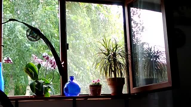 Watch and share Window Wind GIFs by dangavri on Gfycat