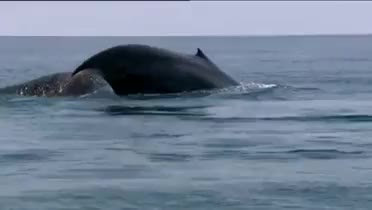 Watch and share Marine Mammal GIFs and Cetacean Gif GIFs on Gfycat