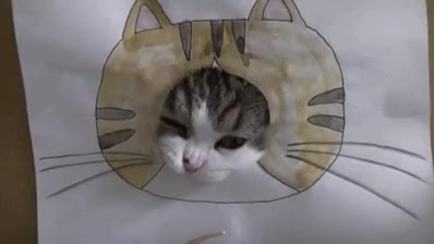 Watch this drawing GIF by GIF Queen (@ioanna) on Gfycat. Discover more cat, cute, cutie, day, drawing, dumb, funny, hard, head, hole, international, kitten, kitty, pet, silly, struggle, try, trying GIFs on Gfycat