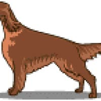 Watch IRISH SETTER GIF on Gfycat. Discover more related GIFs on Gfycat