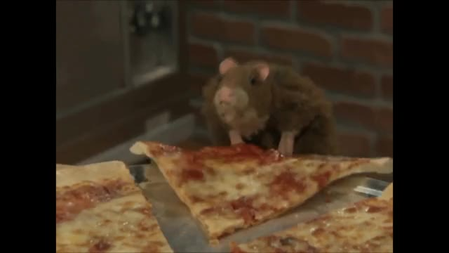 Watch and share Pizza GIFs and Rat GIFs on Gfycat