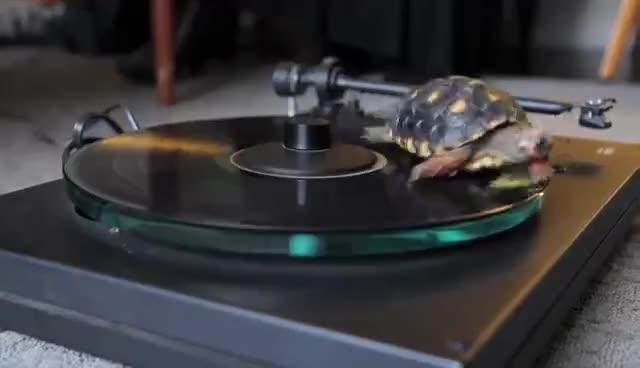 turtle, turtle GIFs