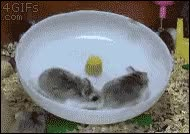 Watch and share Hamster Wheel Gif GIFs on Gfycat