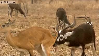 Watch and share Antelope Butt Smell Reaction GIFs on Gfycat