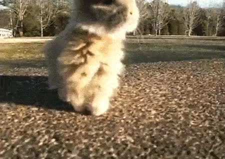 Watch and share Dancing Animal GIFs on Gfycat