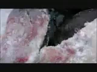 ice age columbus zia cutting seal meat, Ice Age Columbus 04 GIFs