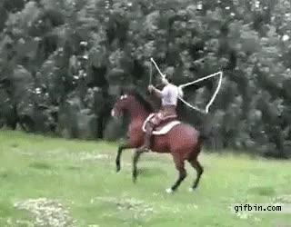 Watch and share Horses GIFs by n0importa on Gfycat