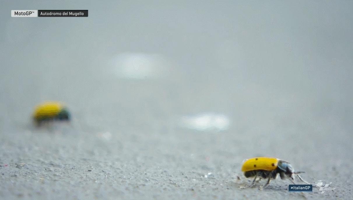 MOTOGP Ladybug GIFs