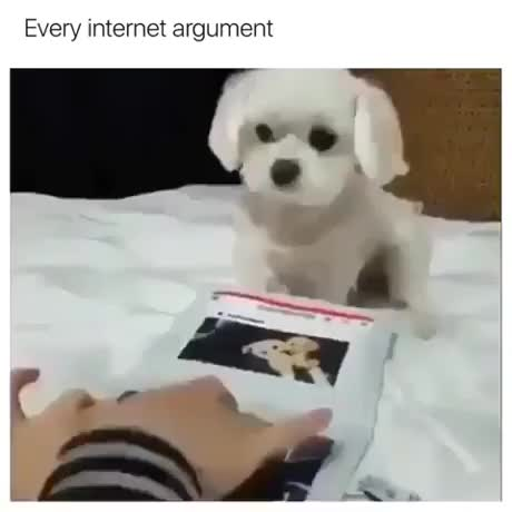 Watch and share Every Internet Argument GIFs by artonbej on Gfycat