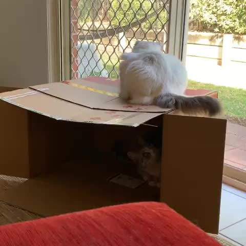 cat, cats, funny, surprised, Oh yeah? . . . . . . . . . . . . Take that! GIFs