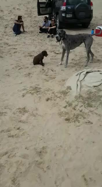 Watch and share Great Dane GIFs and Chocolate GIFs on Gfycat