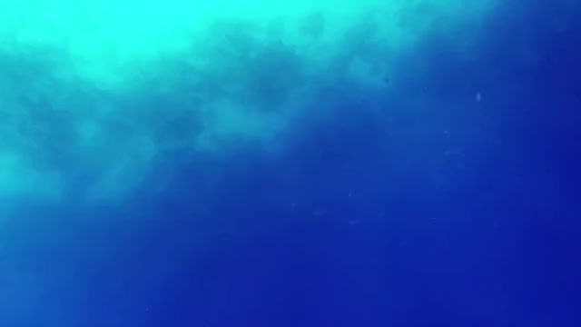 Watch Bullshark Attacks Spearfisherman GIF by GlobalSweet (@superkozz) on Gfycat. Discover more natureismetal, shark GIFs on Gfycat
