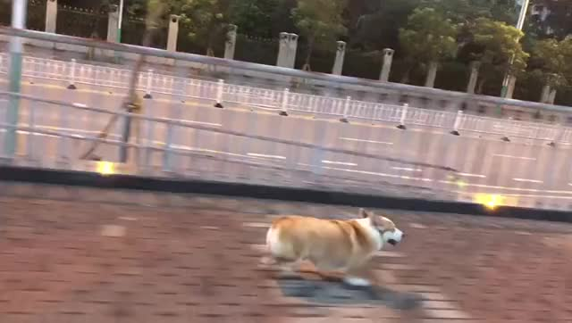 Watch and share Corgi GIFs by bd on Gfycat