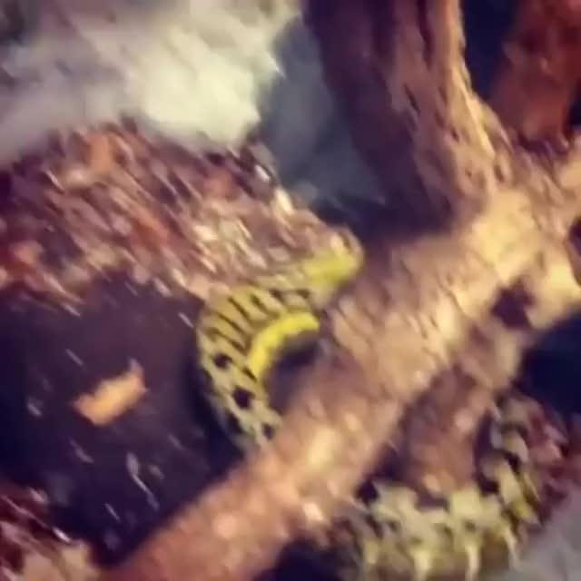 Watch and share Snek Circles GIFs on Gfycat