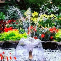 Watch and share Water Fountain Flowers Animated GIFs on Gfycat