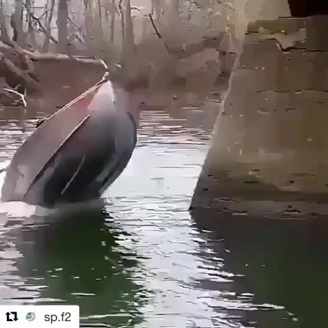 Watch and share Boat Mishap GIFs by Jackson3OH3 on Gfycat