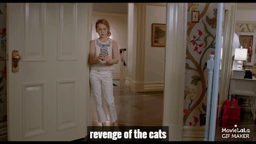 catconspiracy, catreactiongifs, ninelivesmovie, Nine Lives Trailer GIFs
