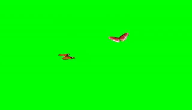 Watch and share Best Animated Butterflies, Flying Butterflies (Green Screen) HD GIFs on Gfycat